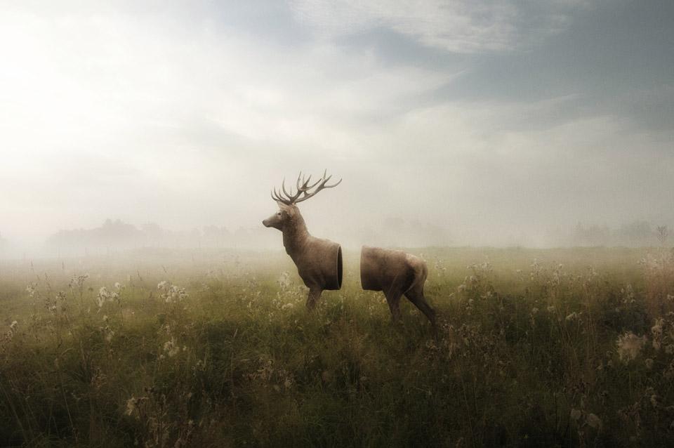 Deer_02_960